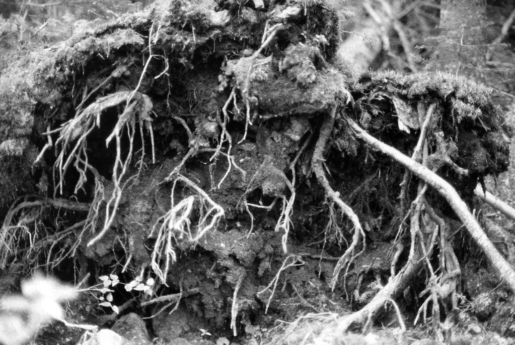 Web-Serie-branches-feuilles-etc1.jpg